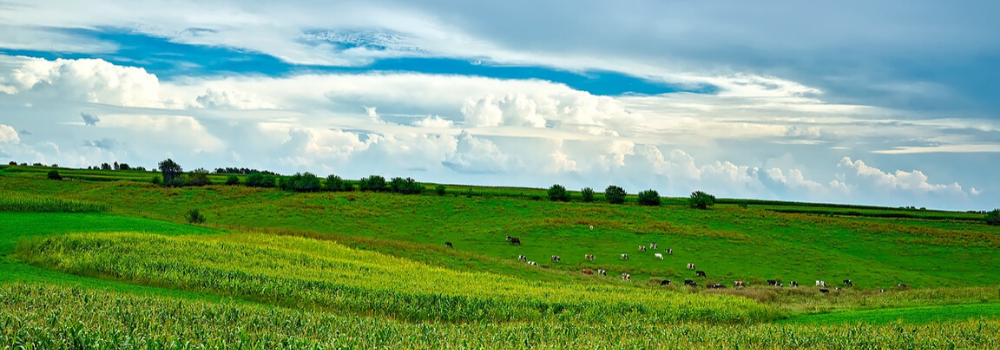 wisconsin countryside with rolling green hills and dairy cows